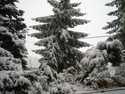 FOTKA - zima.10