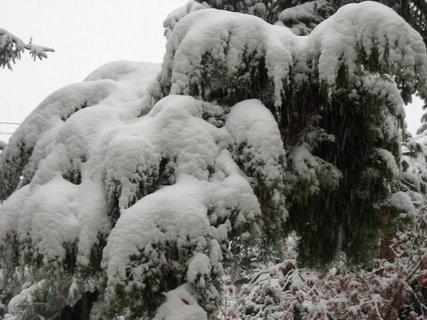 FOTKA - zima.12