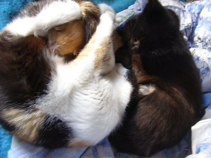 FOTKA - kočky  . . .