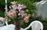kombinovaná kytice