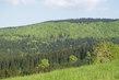 Polanka - beskydské lesy