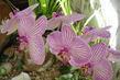 Květy4