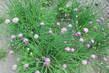 moje zahrada.......