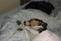 Bety a Bejlí v posteli