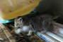Nalezená koťata