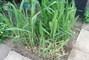 moje zahrada..........