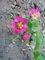 moje zahrada...........