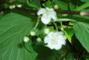 moje zahrada.............