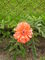 Krásný květ