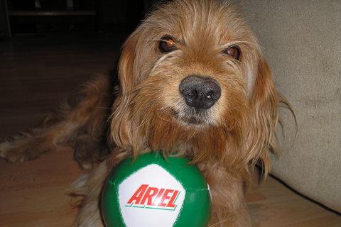 FOTKA - Míša a jeho míček