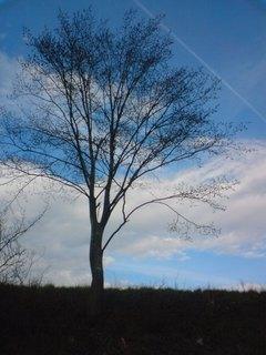 FOTKA - stromy ty já miluji:)