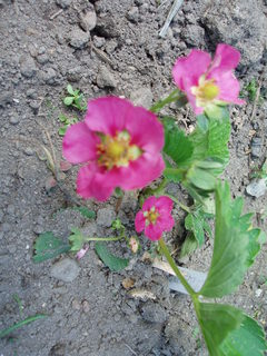 FOTKA - moje zahrada...........