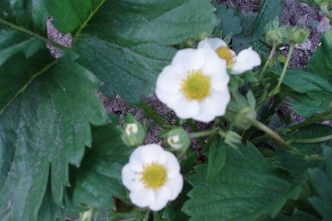 FOTKA - moje zahrada........
