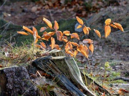 FOTKA - Silvestrovská procházka lesem
