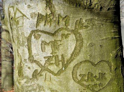 FOTKA - Strom lásky