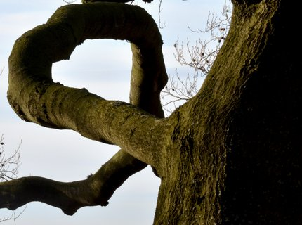 FOTKA - srdce přírody