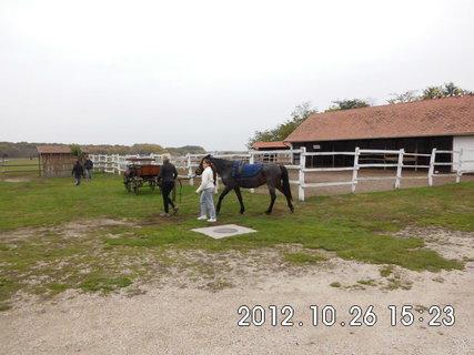 FOTKA - Ma�arsko - farma 4