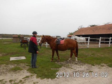 FOTKA - Maďarsko - farma 7