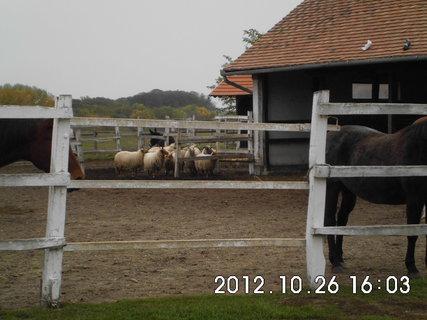 FOTKA - Maďarsko - farma 10