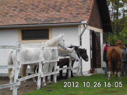 FOTKA - Maďarsko - farma 14