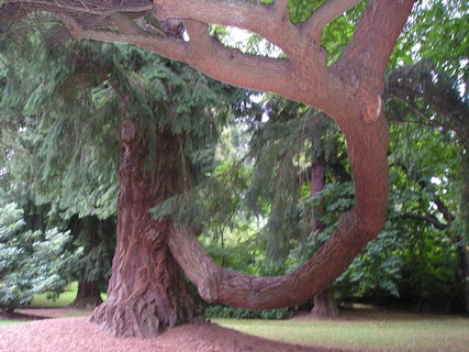 FOTKA - zajímavý strom