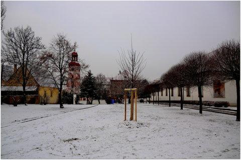 FOTKA - Zima ve městě (v popředí čerstvě zasazená lípa V.Havla)