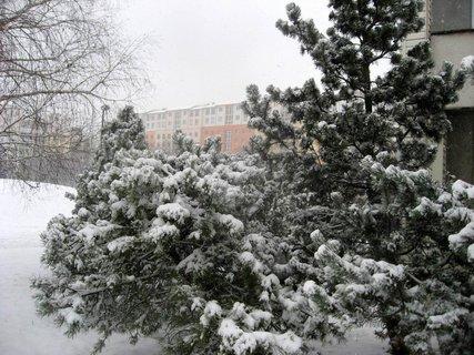 FOTKA - Zima na sídlišti 2