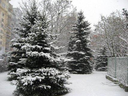 FOTKA - Zima na sídlišti 14