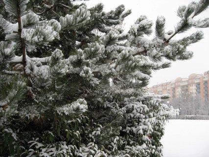 FOTKA - Zima na sídlišti 15