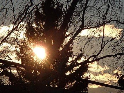 FOTKA - slnko spoza stromu