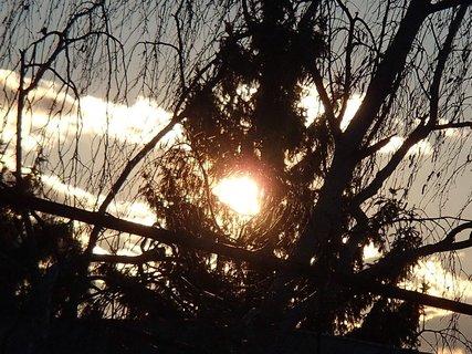 FOTKA - slnko vykúka spoza stromu