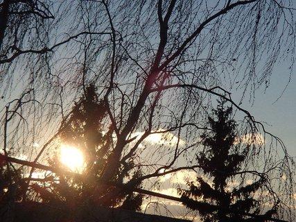FOTKA - slnko vykúka spoza stromu.