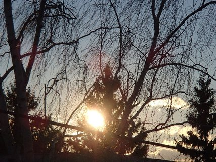 FOTKA - slnko vykúka spoza stromu..