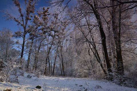 FOTKA - Zima v korunách stromů