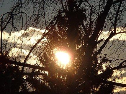 FOTKA - slnko uprostred stromu