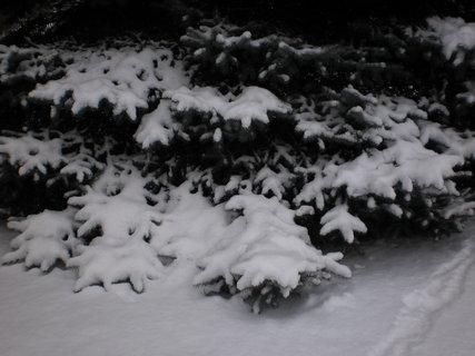 FOTKA - nová zima 3