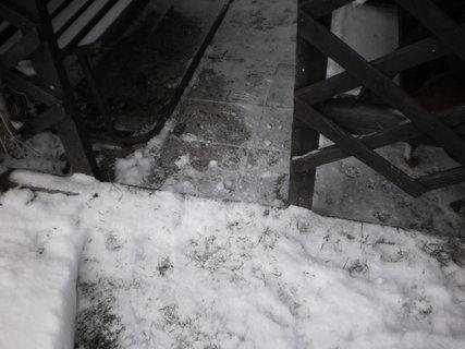 FOTKA - nová zima 4