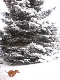 FOTKA - nová zima 6
