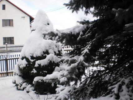 FOTKA - nov� zima 7