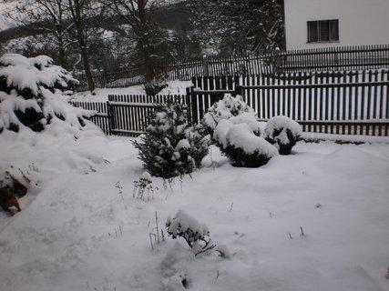 FOTKA - nov� zima 8