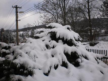 FOTKA - Nová zima 11