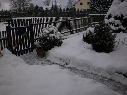 FOTKA - Nová zima 12