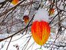 kraslice z loňských velikonoc s  letošní sněhovou čepicí