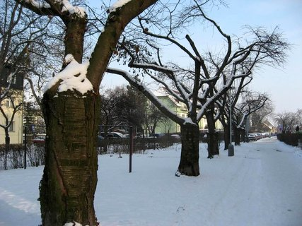 FOTKA - Zima na sídlišti 29