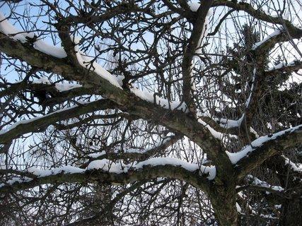 FOTKA - Zima na s�dli�ti 31