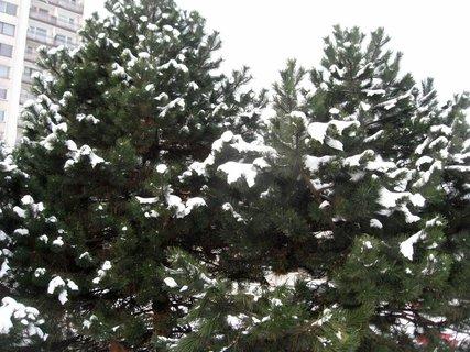 FOTKA - Zima na sídlišti 35