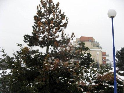 FOTKA - Zima na sídlišti 37