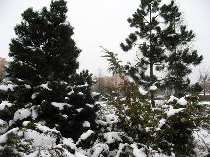 FOTKA - Zima na sídlišti 38
