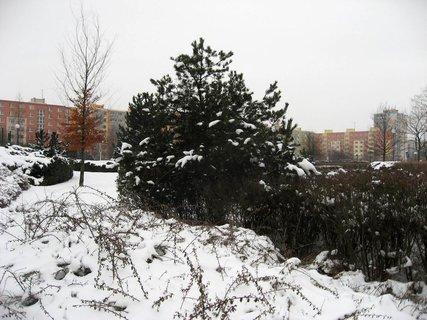 FOTKA - Zima na sídlišti 41