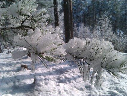 FOTKA - Zima v lese